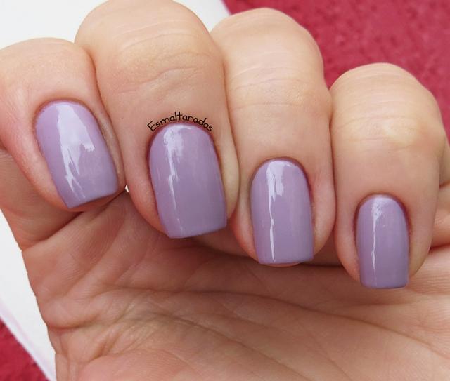 Lavender Fields - Jordana3